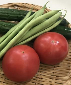 真っ赤な「トマト」と鮮やかなグリーンが眩しい!